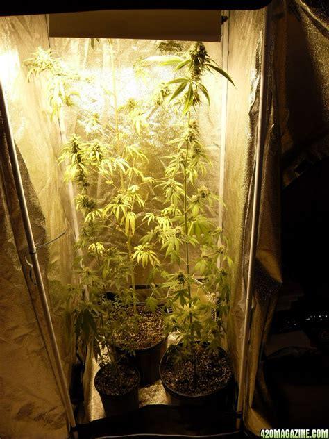 Hps Grow Lights by Hps Light