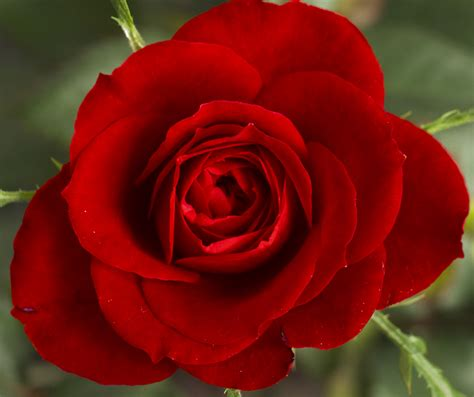 list of flowers with pictures beautiful flowers most beautiful flowers list list of top ten