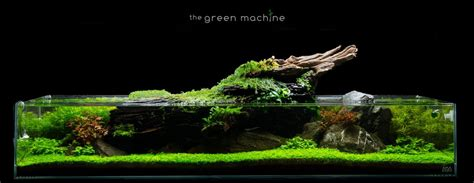 aquascape pictures step by tutorial for a shallow format aquascape along with setup detailing all of the