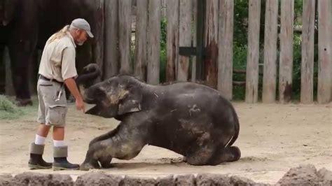training belle  baby elephant youtube