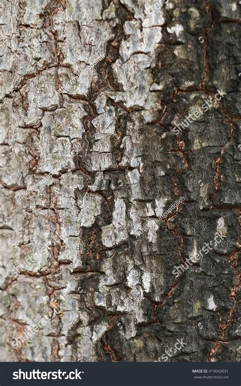 bark color tree bark two colors stock photo 419043031