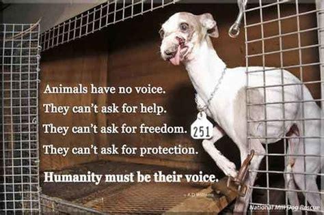 list of puppy mills in ohio legislation fab 4 dogs
