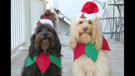 funny pictures dog merry christmas  happy  year youtube