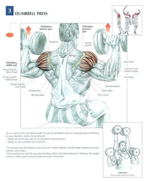 dumbbell bench press muscles worked 1000 images about anatomical workout chart on pinterest