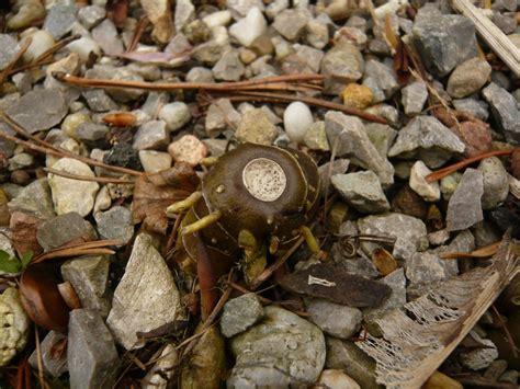Bilder Garten 3696 by Botanische Spaziergaenge At Thema Anzeigen 07 04 2012