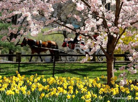 Northern hemisphere embraces flourishing spring flowers[1
