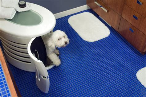 dog going to the bathroom in the house designer pet spaces by denhaus home designing