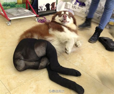 dogs in tights dogs wearing