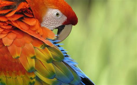 colorful parrot wallpaper colorful bird quotes quotesgram