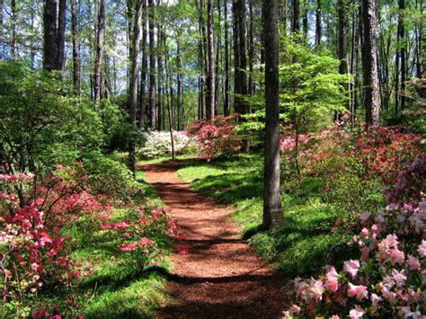 landscaping columbus ga the most 8 beautiful gardens in