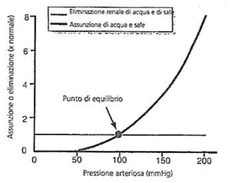 lunghezza vasi sanguigni fisiologia cuore