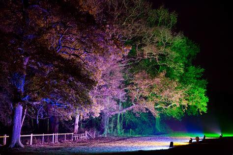 illuminated trees at night free stock photo public