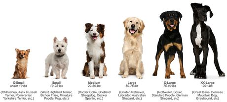 small sized dogs dogs of different sizes in order of size from small to large breeds picture
