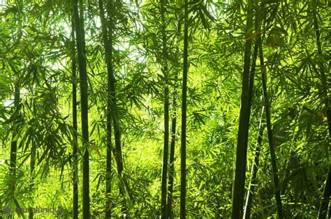 Asian Wall Mural asian bamboo forest buy prepasted wallpaper murals