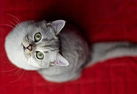 why do cats pee on beds why your cat is peeing on your bed petmd cat training