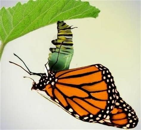 what the caterpillar calls the end the rest of the world