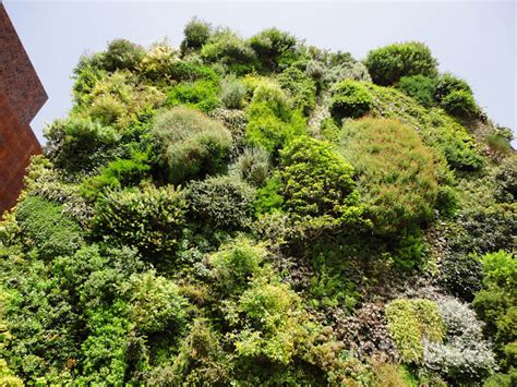 blanc s lush vertical garden is a green oasis in