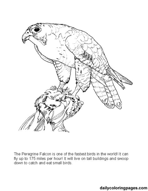 Big Coloring Pages Of Animals | texas big bend peregrine