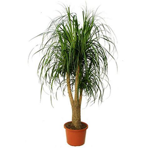 piante da ufficio 10 piante ornamentali antismog per l ufficio e la casa