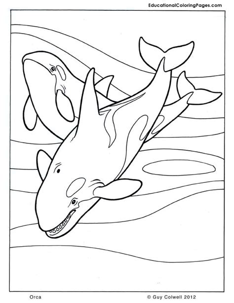 Orca Coloring Animal Coloring Pages For Kids Orca Coloring Pages