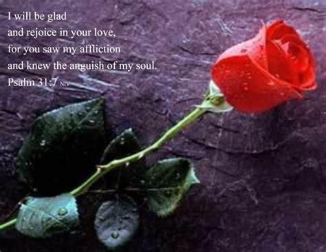 imágenes rosas frases im 225 genes de rosas rojas con frases de amor informaci 243 n