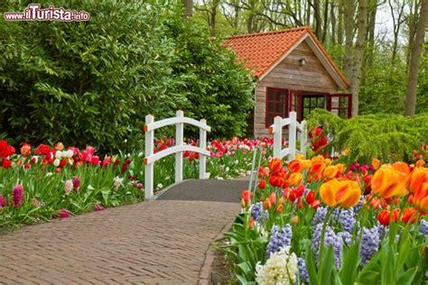 meteo s in fiore tuilpani in fiore a lisse olanda qui si trova