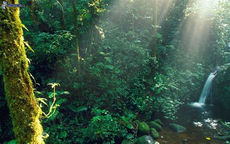 la selva tropical image gallery selva tropical