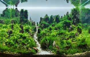 Aquascape Contest Naturaquarium Und Aquascaping Aquascaping Wiki