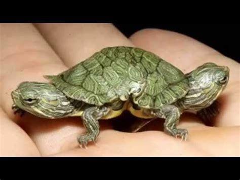 imagenes de animales raros en el mundo los animales mas raros del mundo videos videos