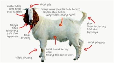 Aqiqah Recommended Di Surabaya aqiqah surabaya 187 an nur catering surabaya