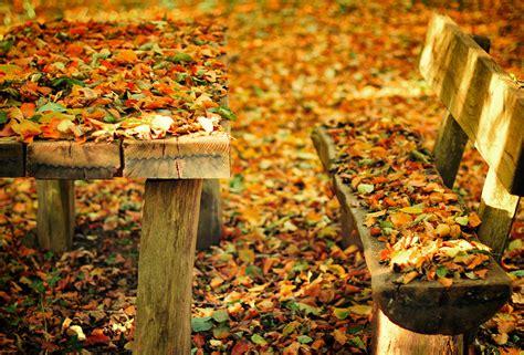 fall bench bench nature park bench fall autumn wallpaper 2000x1358