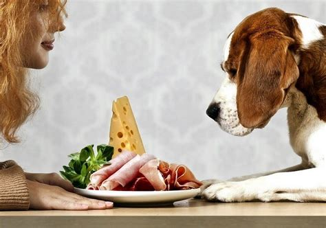 how to dogs not to eat everything human food for dogs friendly foods tips and advice