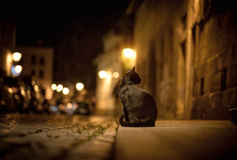 wallpaper cat night cat city night street bokeh lights road pavement sidewalk