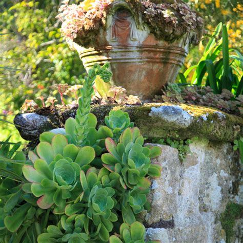 in season succulents ideal home