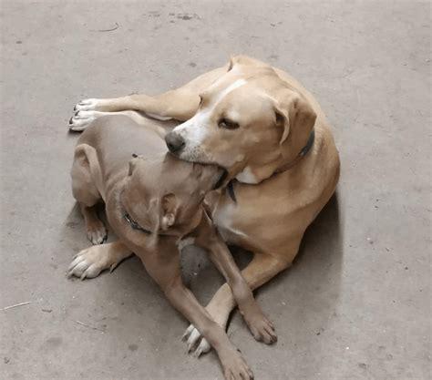 meme generator dog eating  dog newfa stuff
