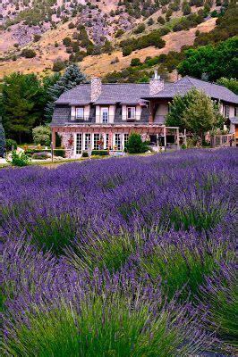 when is lavender in season in michigan 25 best ideas about apple farm on pinterest fruit