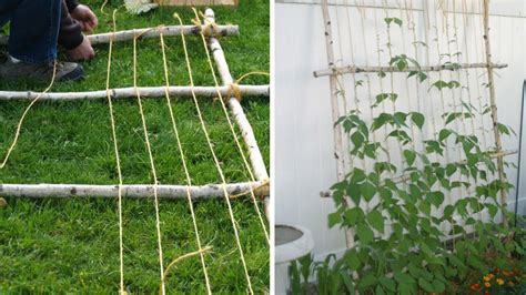 faire un treillis en bambou un tuteur comme un treillis