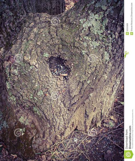 tree trunk l base heart shaped tree trunk stock photo image 52555908