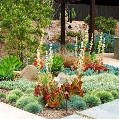 drought tolerant backyard designs 430 best images about drought tolerant gardens on pinterest