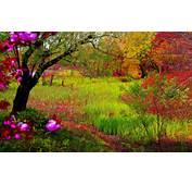 Imagenes De Paisajes Hermosos Primavera