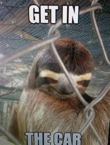 Creepy Sloth Meme - creepy sloth sloths pinterest creepy sloth the o