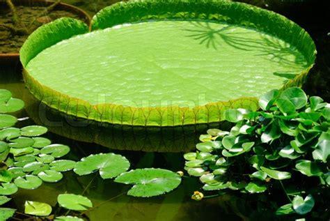 one leaf lotus so keep this image of the lotus leaf in mind as we turn