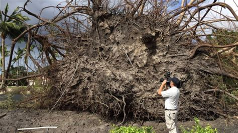 Palm Gardens Weather by National Weather Service Confirms Tornado Hit Palm