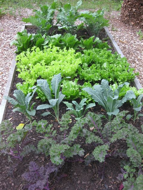 Kale Garden by Recipe Oven Baked Kale Snackers