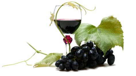 Grapes And Wine Home Decor by Interesting Facts About Australian Wine Industry