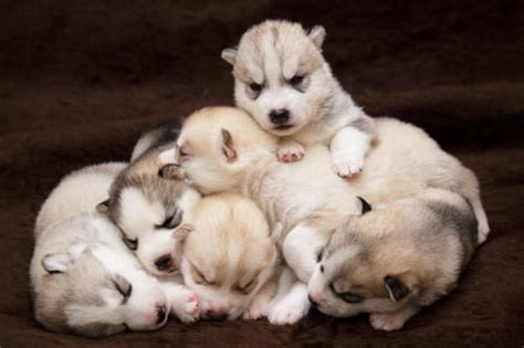 puppy pile puppy pile pictures photos and images for and