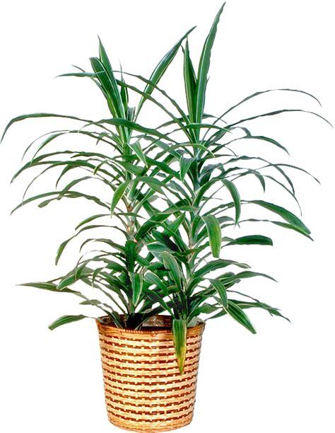 floor plant essence of ladytiki my home page 169 2015