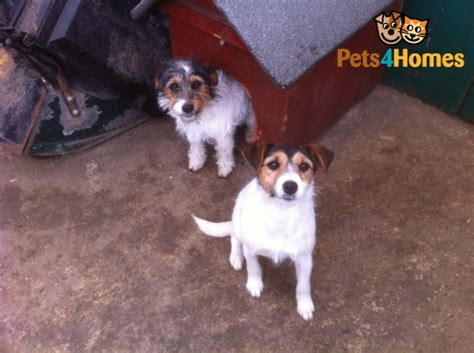 Small Dogs Needing New Home 2 Small Dogs Need Loving Home Cheltenham