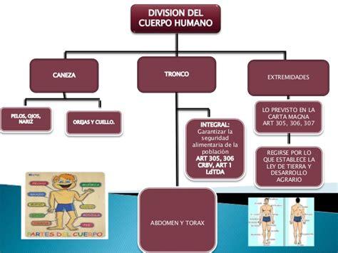 imagenes mapa mental del cuerpo humano mapa conceptual sobre la division del cuerpo humano piel