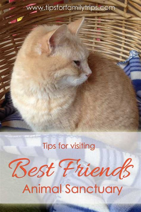 best friends animal sanctuary 6 tips for visiting best friends animal sanctuary
